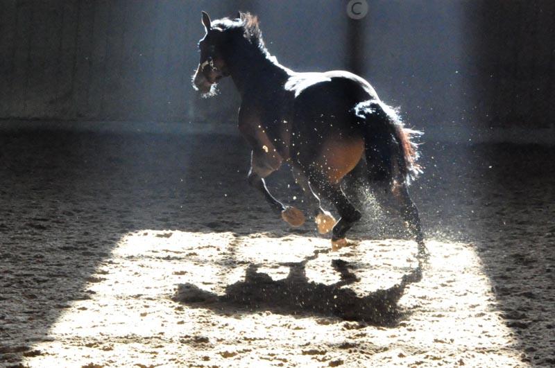 Pferd ohne Reiter